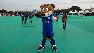 Filbert Fox in Bengaluru